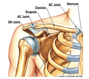 Boney and ligamentous structures of the shoulder